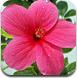 测测你是哪种花
